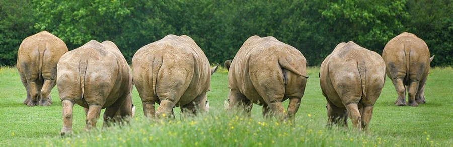 8-Head-Turning-Facts-Why-Big-Bums-Are-Awesome